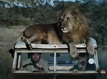 Lion_on_Land_Rover.jpg